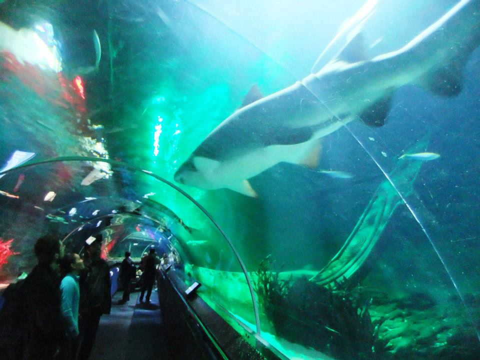 kelly tarlton's sea life aquarium tunnel