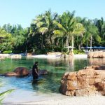 Discovery Cove Orlando (Florida, United States)