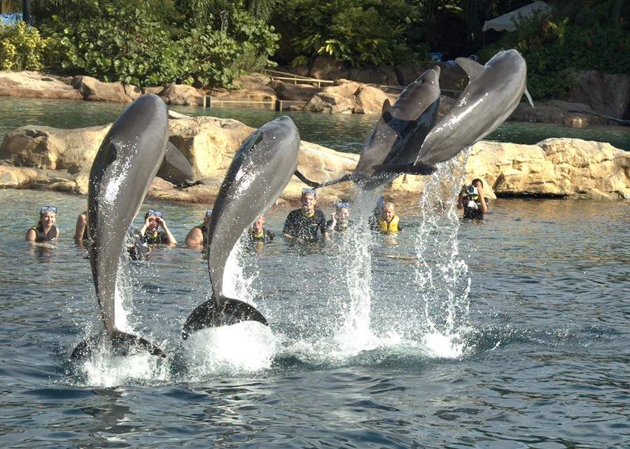 Discovery Cove Orlando in Florida