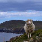 South-West of Ireland (North Atlantic)
