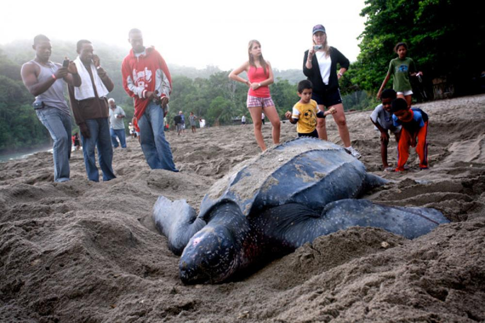 Turtle Watching in Trinidad and Tobago