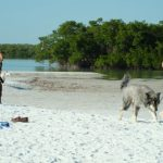 Pet-friendly Bonita Springs (Florida)