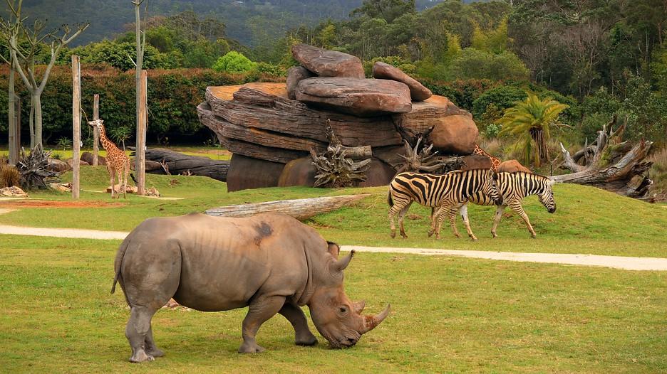 Zoo-in-Queensland-Australia