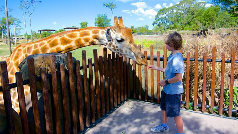 Zoos and animal parks in Queensland, Australia
