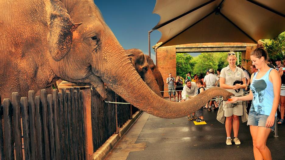 animal-parks-in-Queensland-Australia