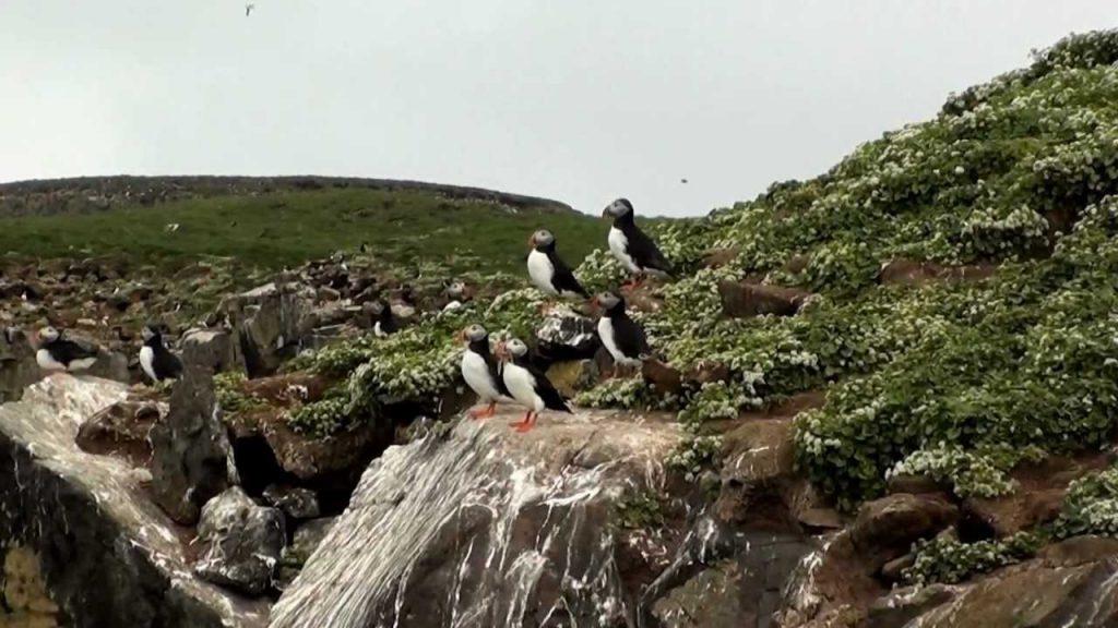 Grímsey-Island