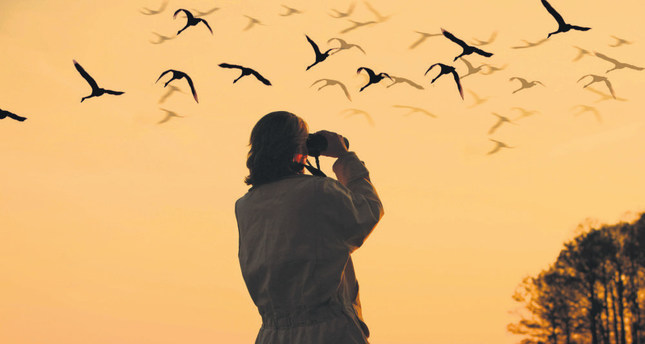 Reasons why go for bird-watching